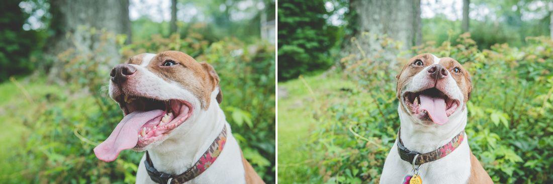 Philadelphia Pet Photographer Pet Photographer Rescue Dogs Pets