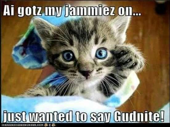 Late Night Smiles Good Night Funny Good Night Cat Cute Cat Memes
