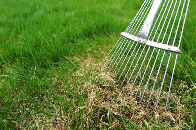 Clearing up confusion: The pros and cons of thatch ...