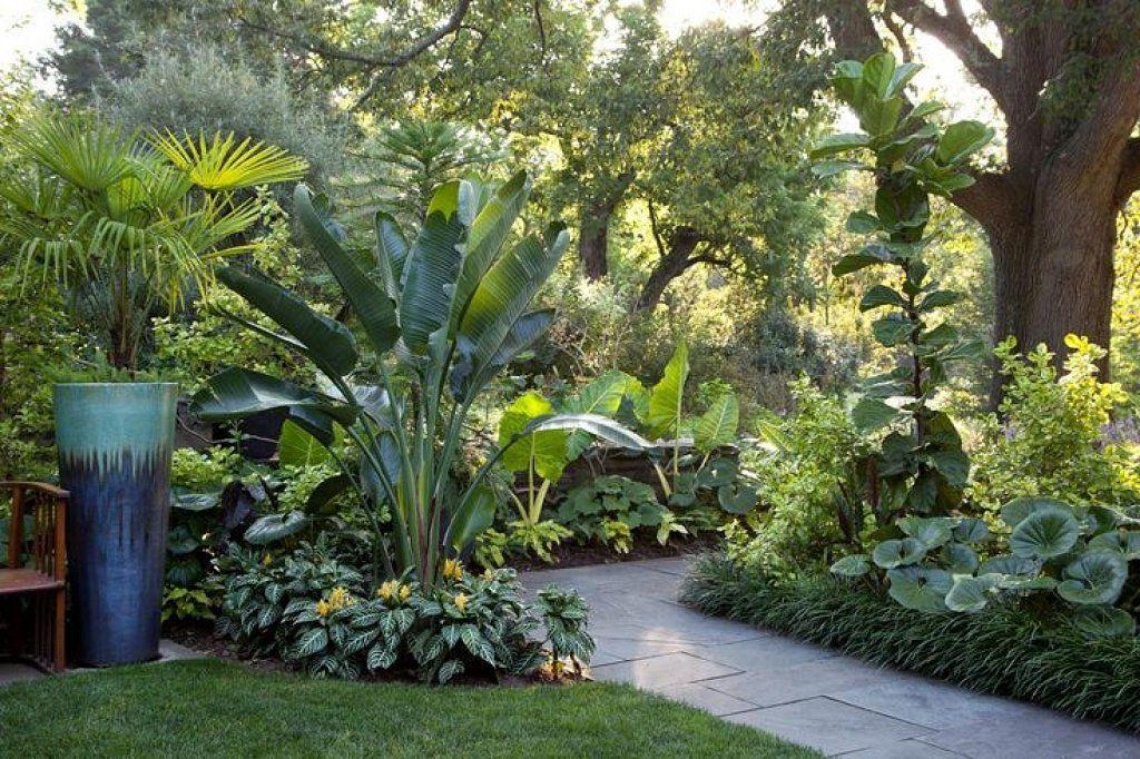 Plantas tropicales para jardin buscar con google for Google jardin