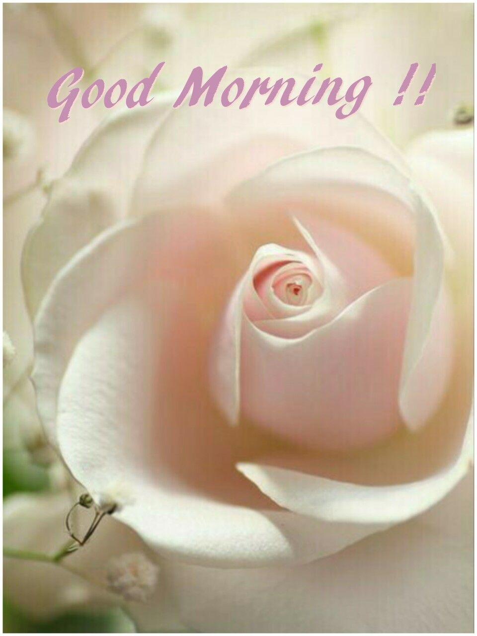 Good Morning Good Morning Pinterest Colorful Roses Flowers