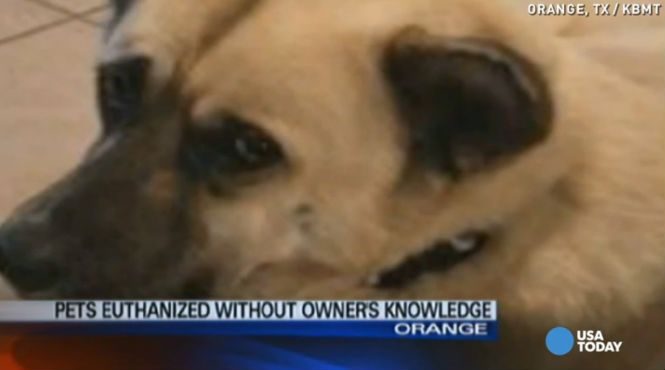 Pets Euthanized Without Owners Knowledge Read More At Crime Feed Newborn Puppies Pets Animal Activism