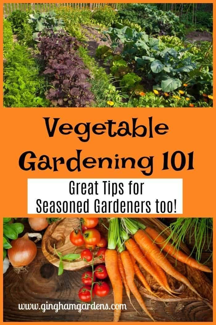 Vegetable Gardening 101 - Great Tips for Seasoned Gardeners Too
