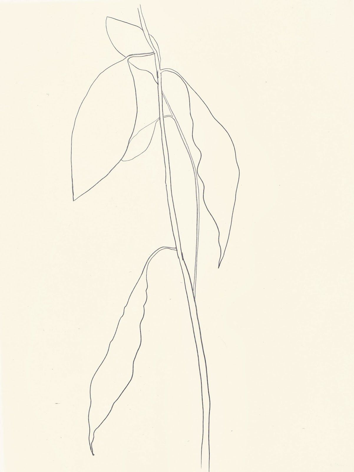 Ellsworth Kelly Plant Drawings Avocado Leafs 1967