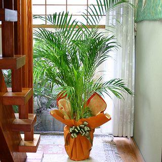 Indoor plants decoration pictures