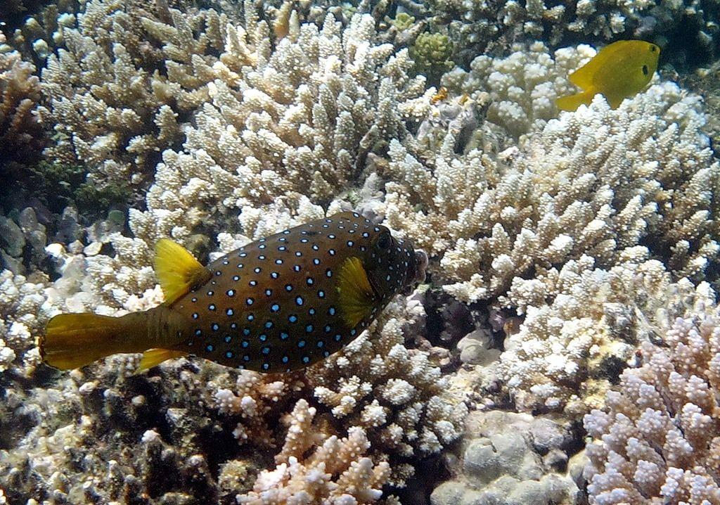 рыбы красного моря фото с описанием забыла, что