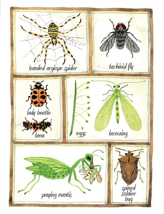how to get rid of flying insects in the garden