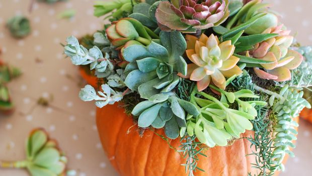 4 Fresh Centerpieces Perfect for Thanksgiving - GoodHousekeeping.com