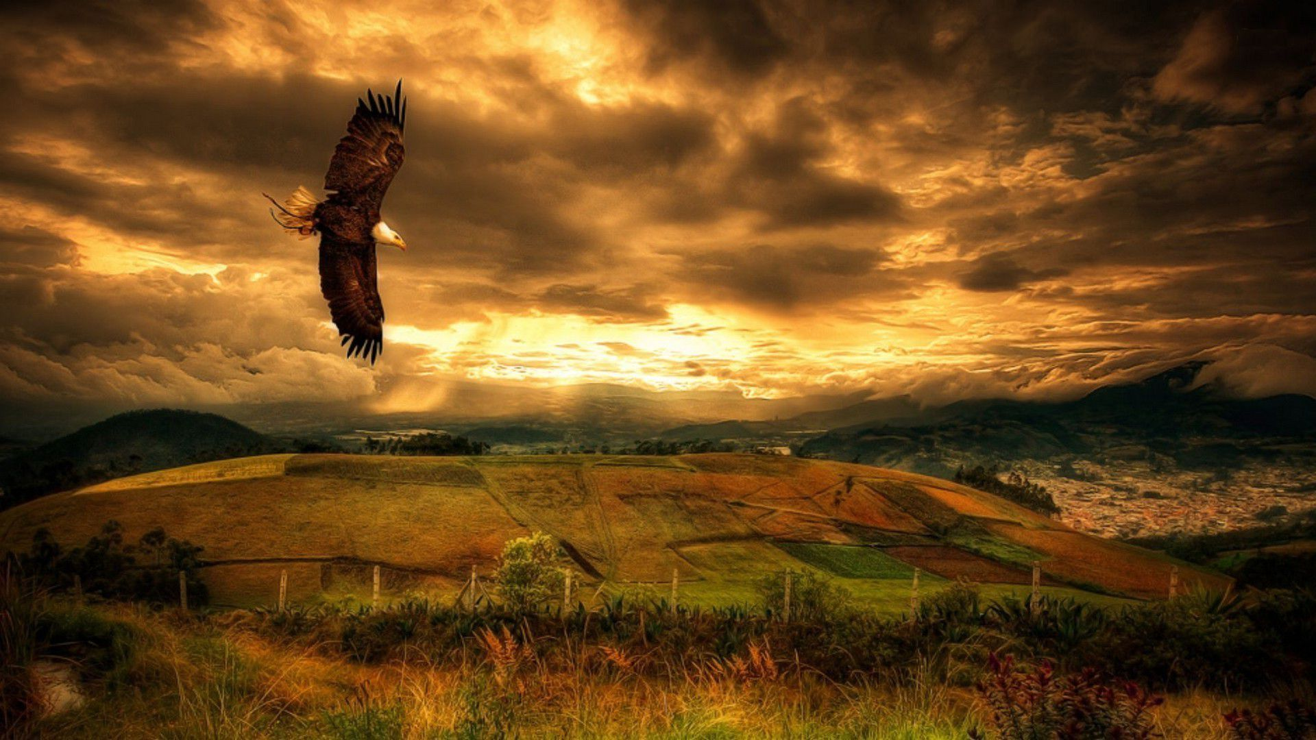 Hd wallpaper eagle - Free Bald Eagle Wallpapers Wallpaper Hd Wallpapers Pinterest Eagle Wallpaper And Wallpaper
