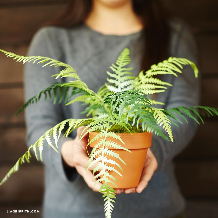 interesting fern house plants. Make a set of potted house plants with these beautiful and realistic paper fern  Potted Paper Fern Plants Simple projects
