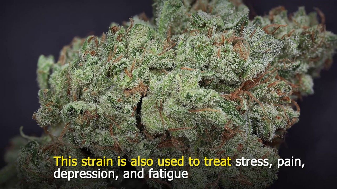 Top 5 Strongest Sativas For Energy and Focus | Cannabis Marijuana