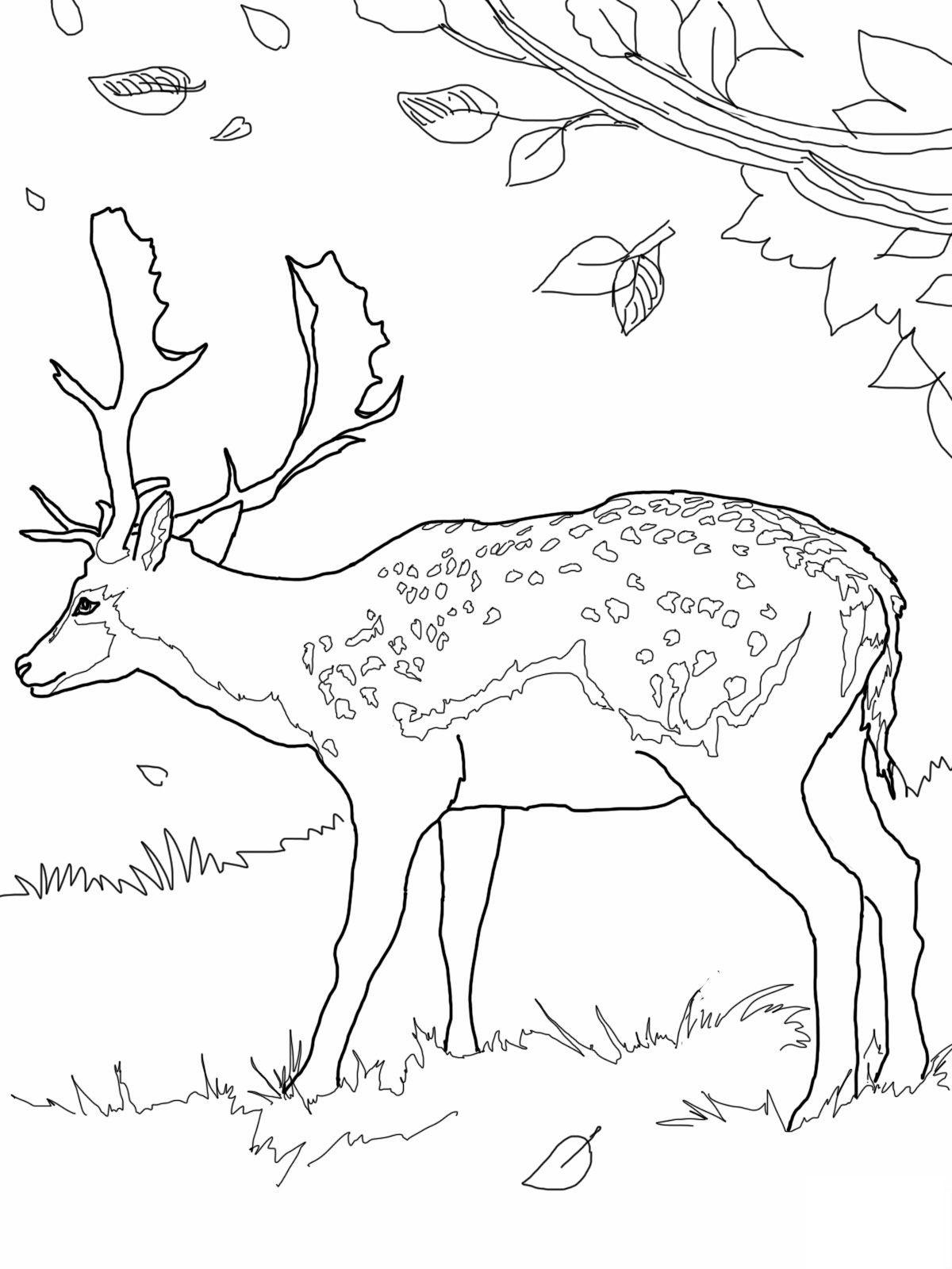 Free Printable Deer Coloring Pages For Kids | Pinterest | Ciervo ...