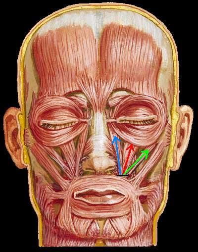 With you Facial muscle toning exercises