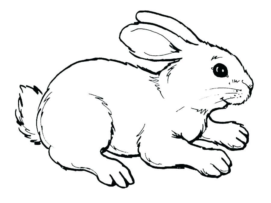 ارنب للتلوين رسومات أرانب للتلوين لتنمية مهارات طفلك بفبوف Bunny Coloring Pages Bunny Drawing Cartoon Coloring Pages