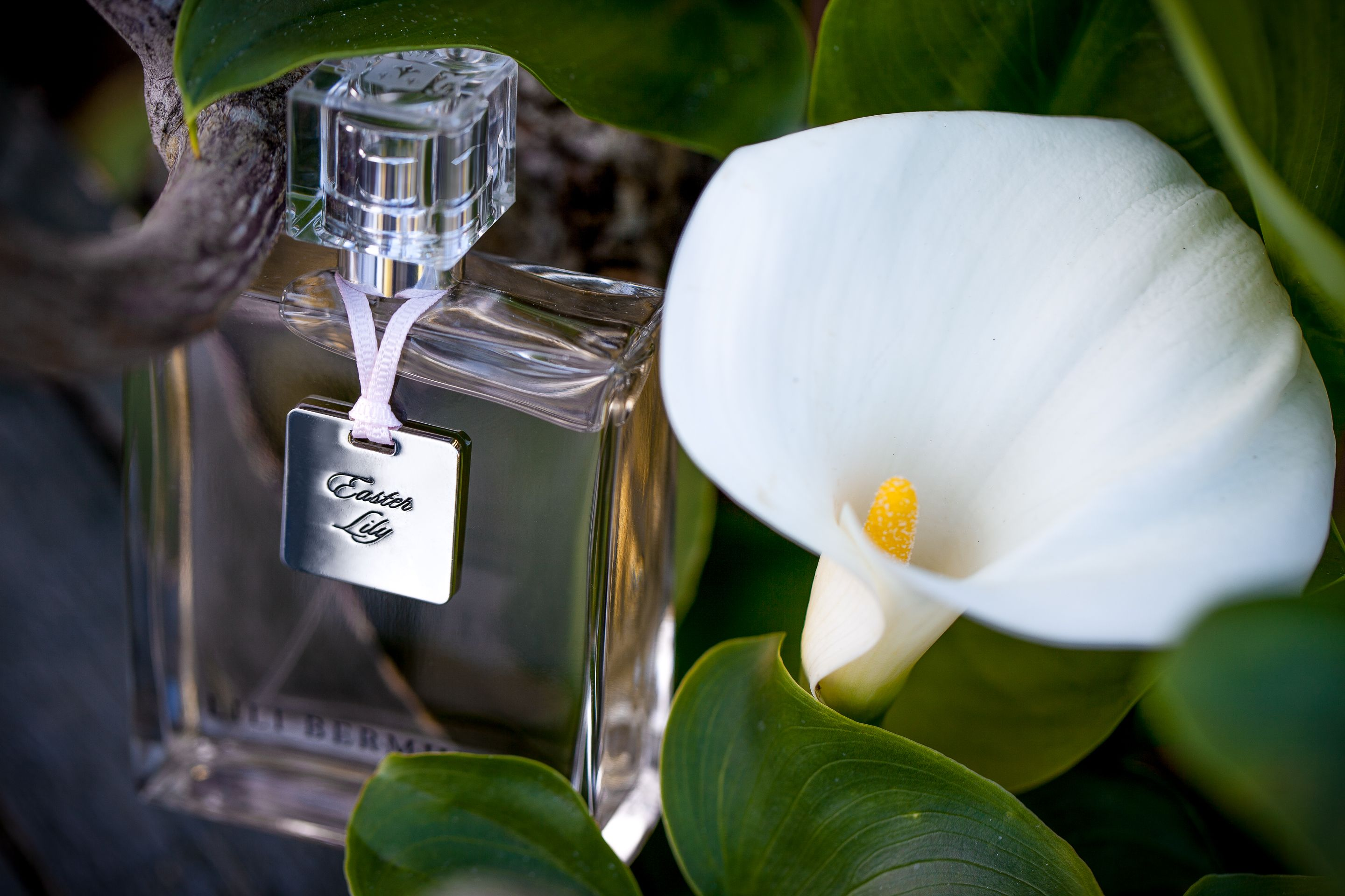 Easter lily is lili bermudas raison dtre this fragrance is our this fragrance is our personal homage to this magnificent white flower emblem of our beautiful island easter lily is a classic white floral fragrance mightylinksfo