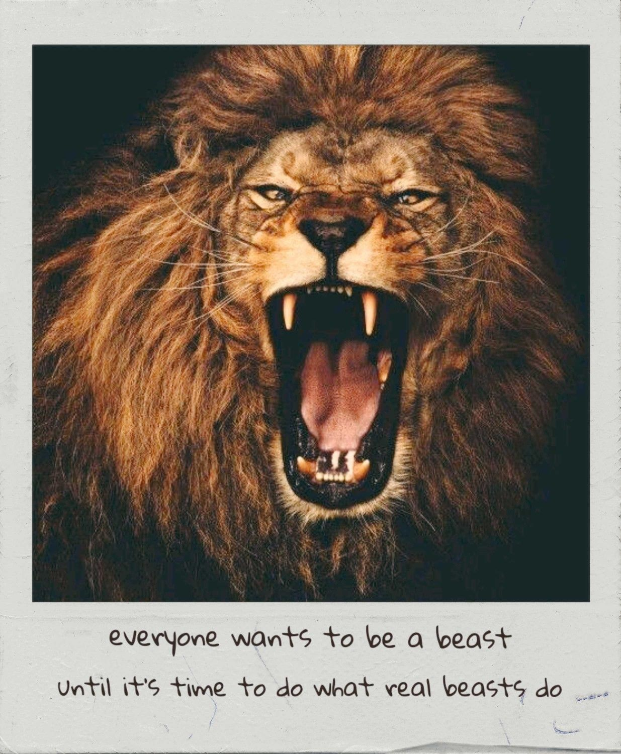 Lion    | just    in 2019 | Lion quotes, Lion, Lion tattoo