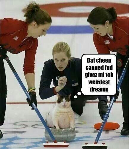 Olympic cat.