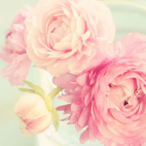 peonies | colors | pinterest | peony and ranunculus