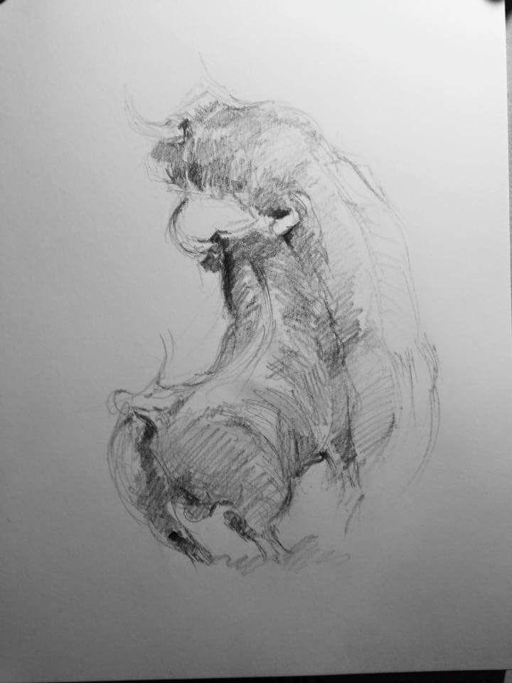 Pelea De Toros A Lapiz Art Drawings Sketches Y Art