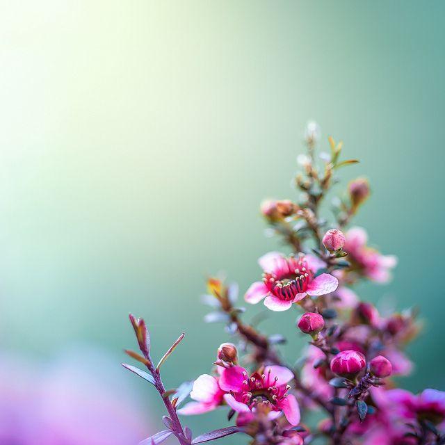 Flower   Flickr: Intercambio de fotos