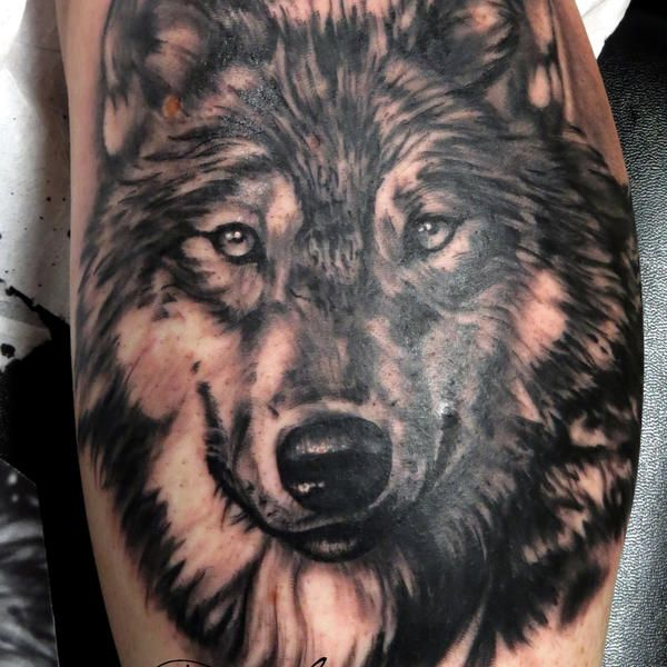 photo de tatouage loup r aliste tatouage d 39 un portrait de loup r aliste en noir et gris d 39 apr s. Black Bedroom Furniture Sets. Home Design Ideas