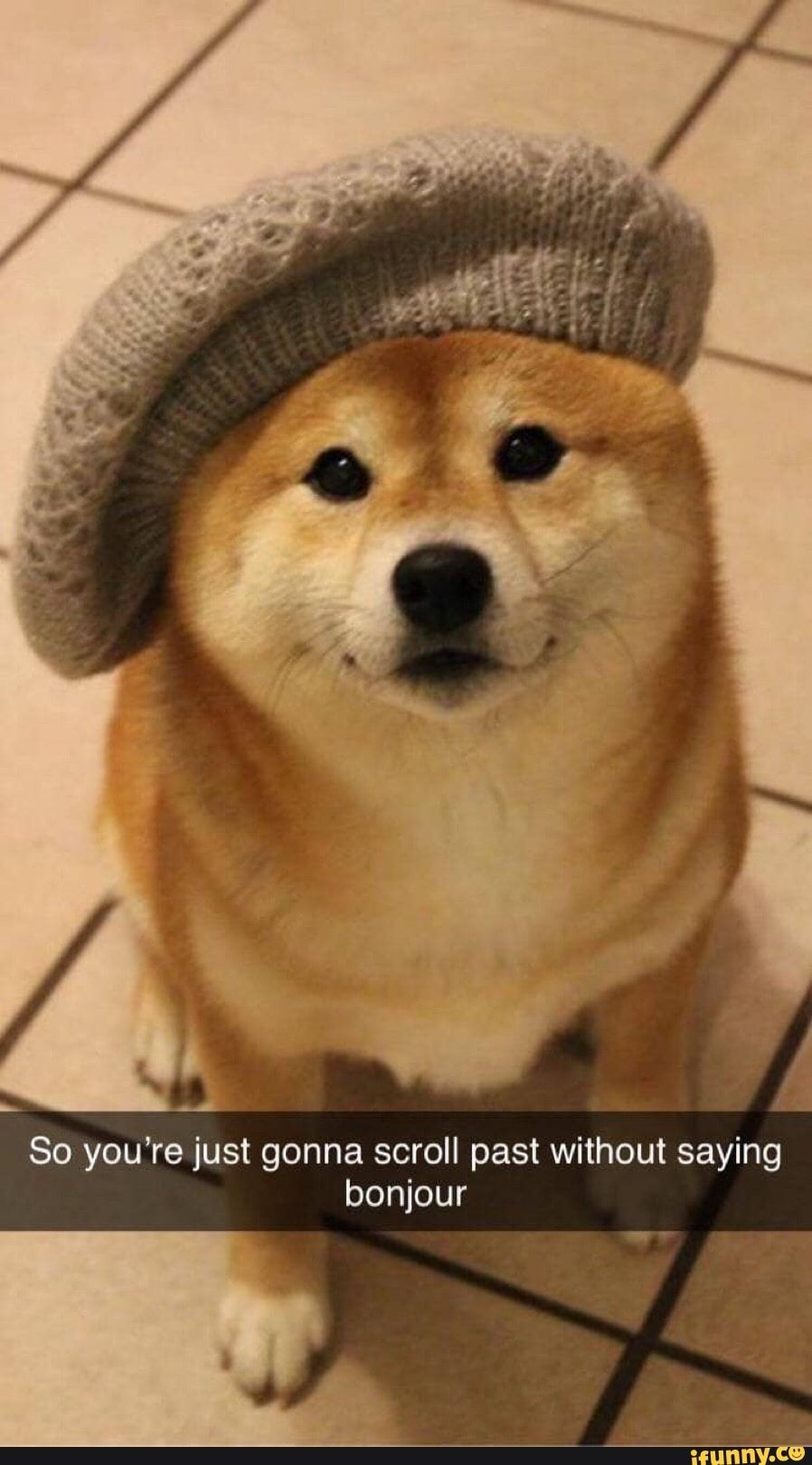 So You Re Just Gonna Scroll Past Without Saying Bonjour Ifunny Dapper Dogs Cute Animals Cute Dogs