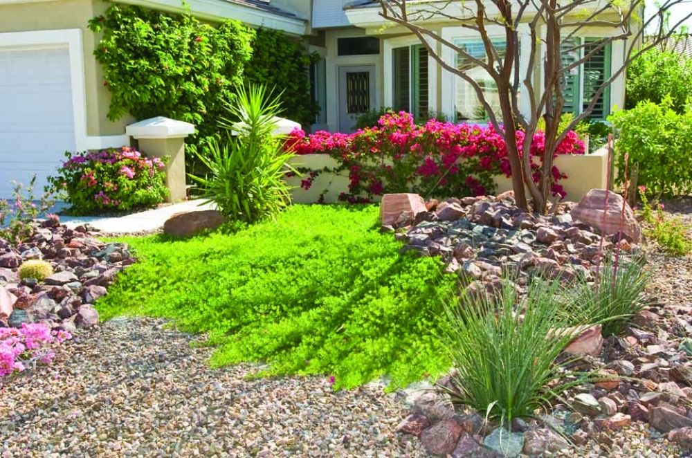 desert plants for landscaping landscape irrigation and native