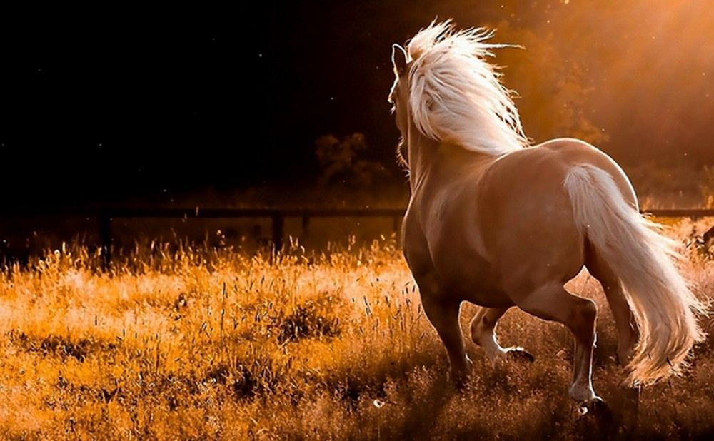 Full Hd Wallpapers Find Best Latest Full Hd Wallpapers In Hd For Your Pc Desktop Background And Mobile Phones Horse Wallpaper Horses Palomino Horse Beautiful wallpaper desktop horse