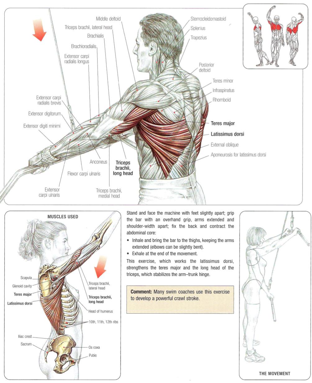 Straight-arm lat pull-downs (latissimus dorsi, teres major, triceps ...