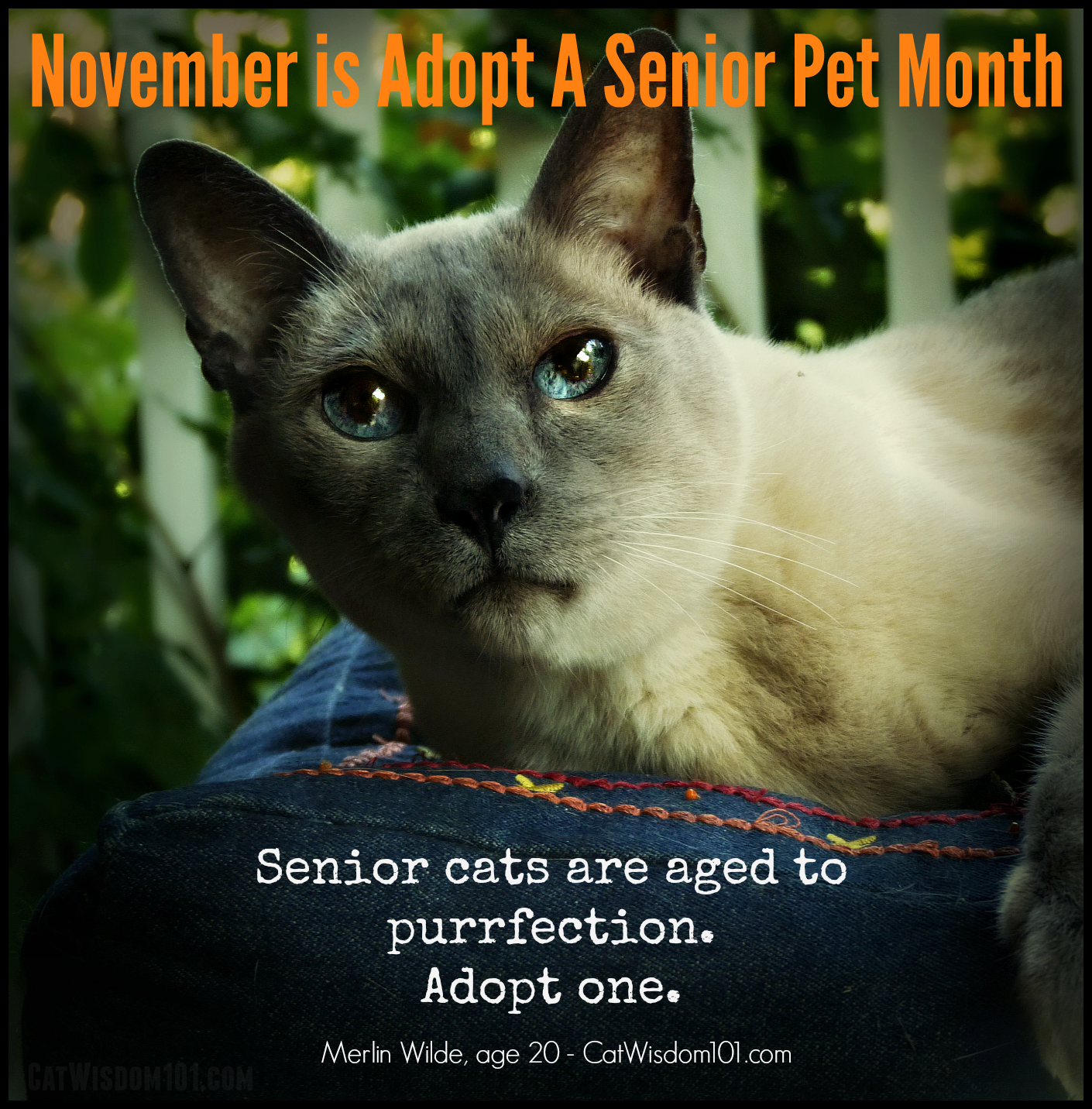 Mondays With Merlin ASPCA Adopt A Senior Pet Month Invite