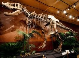 Going Once Going Twice Dinosaur Bones Are Up For Auction In Las