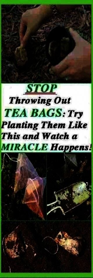 bags after you drink your teabut that will change after you read this article Here we will inform you about many useful things that you can do with tea bagsYou probably t...