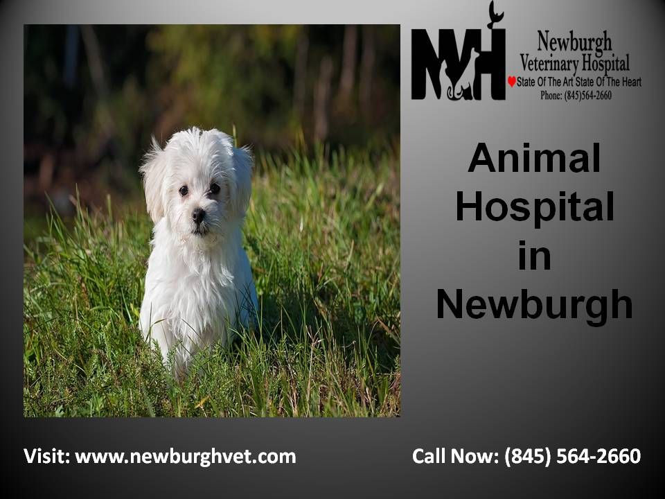 At Newburgh Animal Hospital We Provide The All Veterinary Services For Your Healthy Pet At Affordable Price Animal Hospital Veterinary Hospital Pet Vet