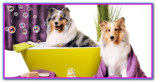 Best Cheap Dog Grooming Near Me (With images) Dog