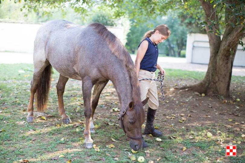 How to Decrease Horse Heat Stress Horses, Heat stress