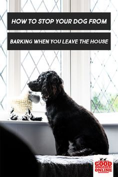 My Dog Barks All Day While I M At Work What Can You Do About It