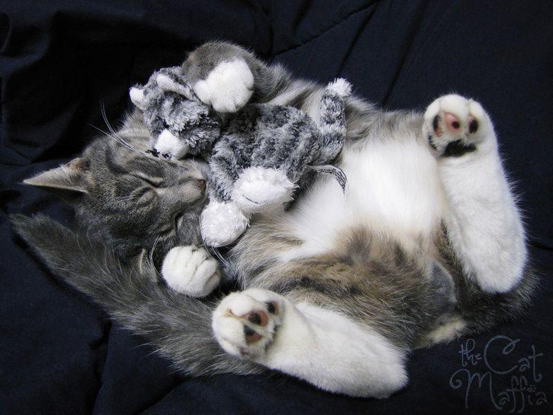 Plushie cuddle