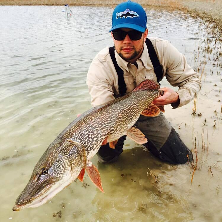Pike on a fly yuba ut fishing pinterest fly fishing for Trout fishing utah