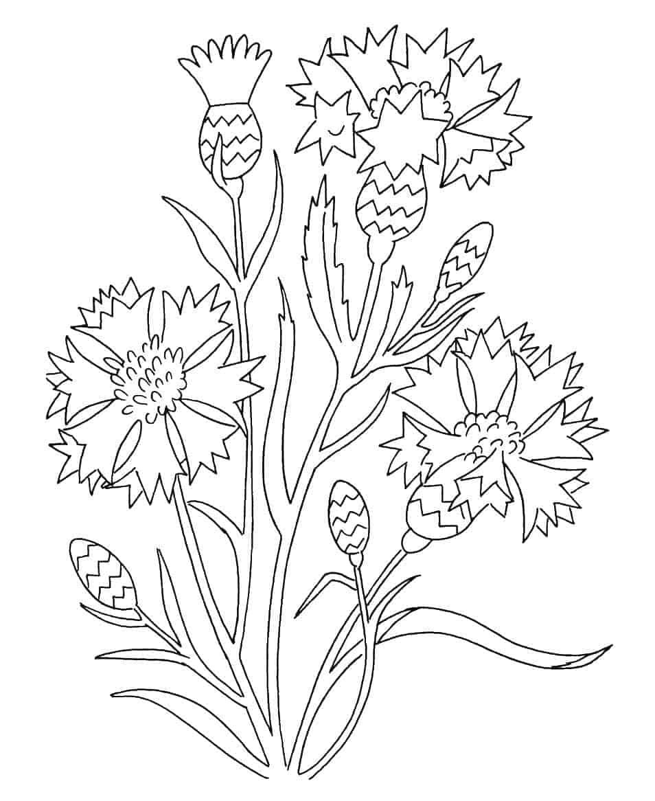 Flower Garden Coloring Pages From Flowers Coloring Pages Printable