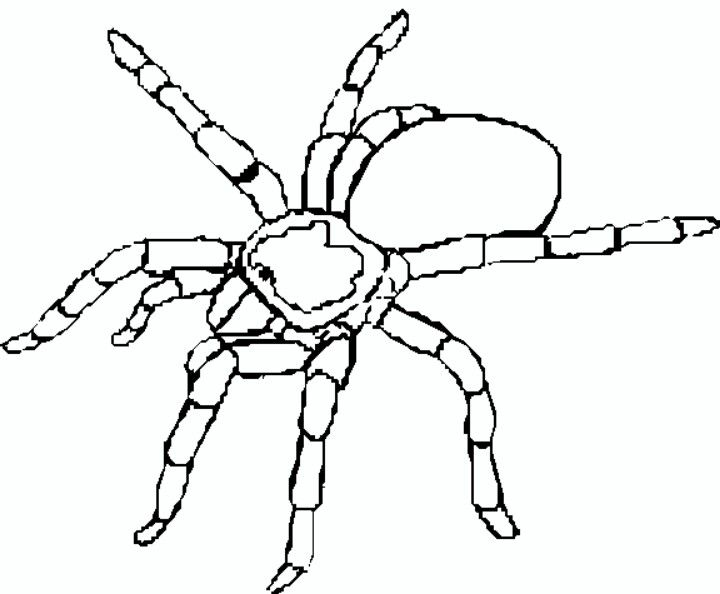 Tarantula Coloring Page Spider Coloring Page Halloween Coloring