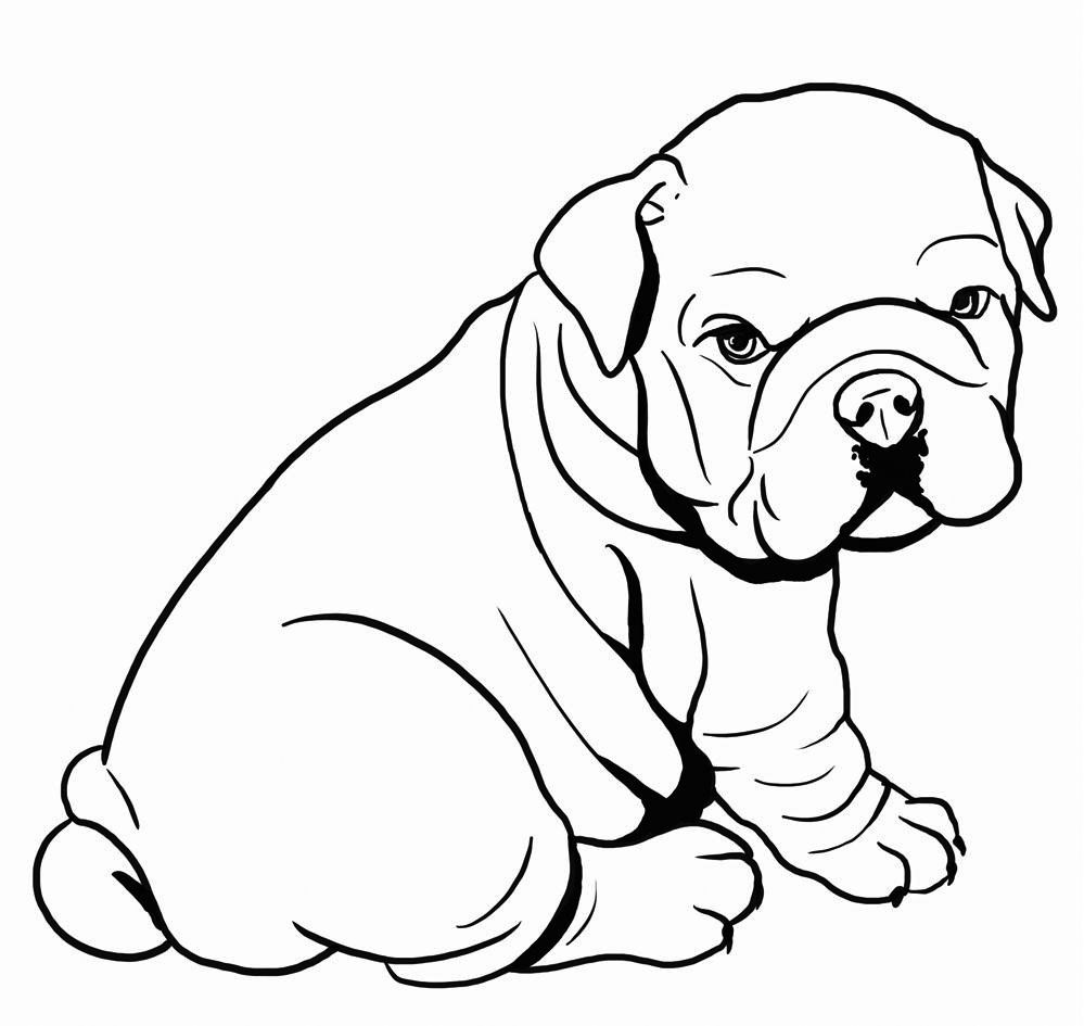 Bulldog Coloring Pages Best Coloring Pages For Kids Bulldog Drawing Dog Coloring Page Animal Drawings