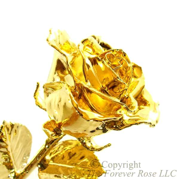 Image of our famous gold rose.