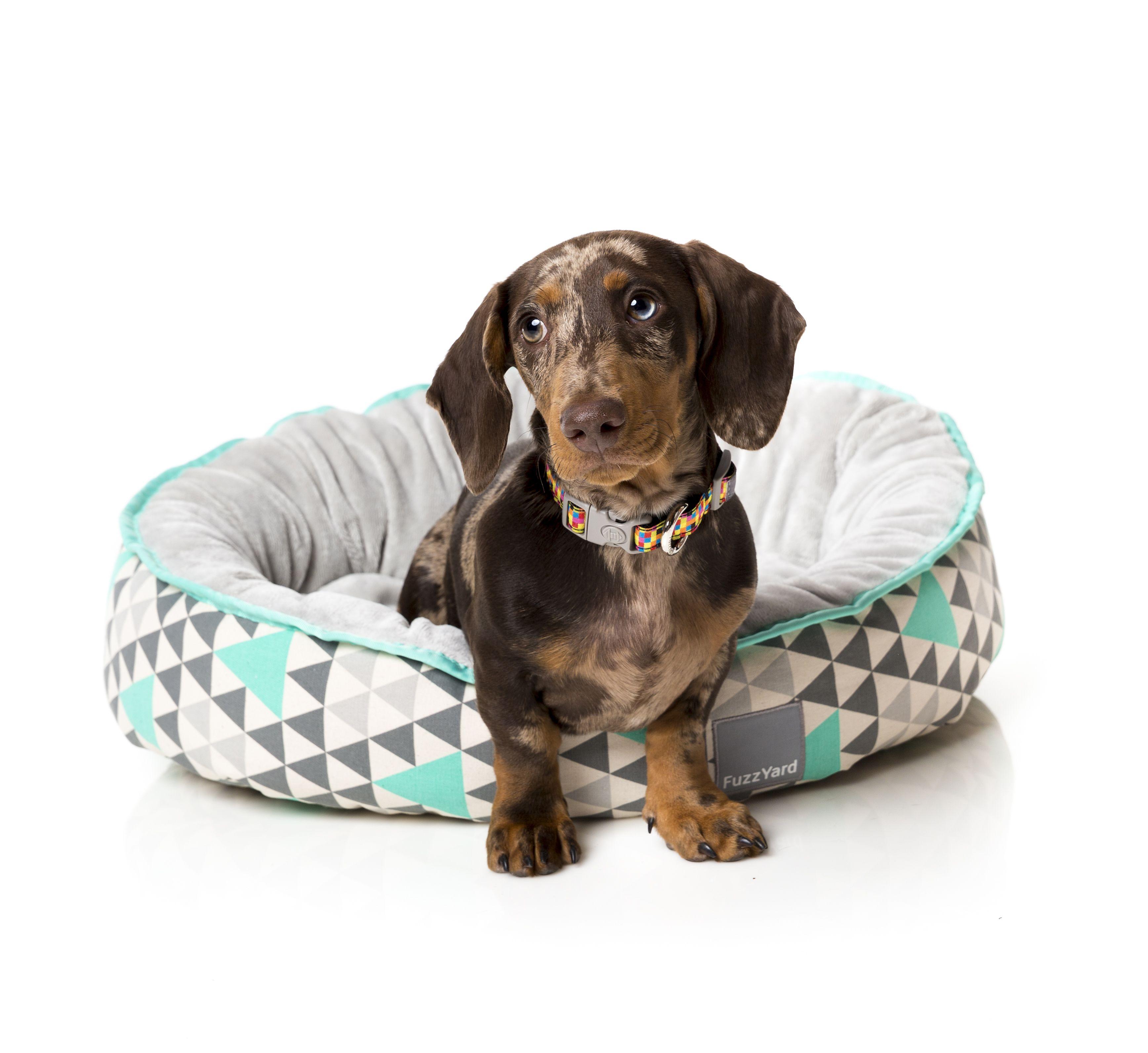FuzzYard Fresh Mint Dog Bed fuzzyard dogbed dog