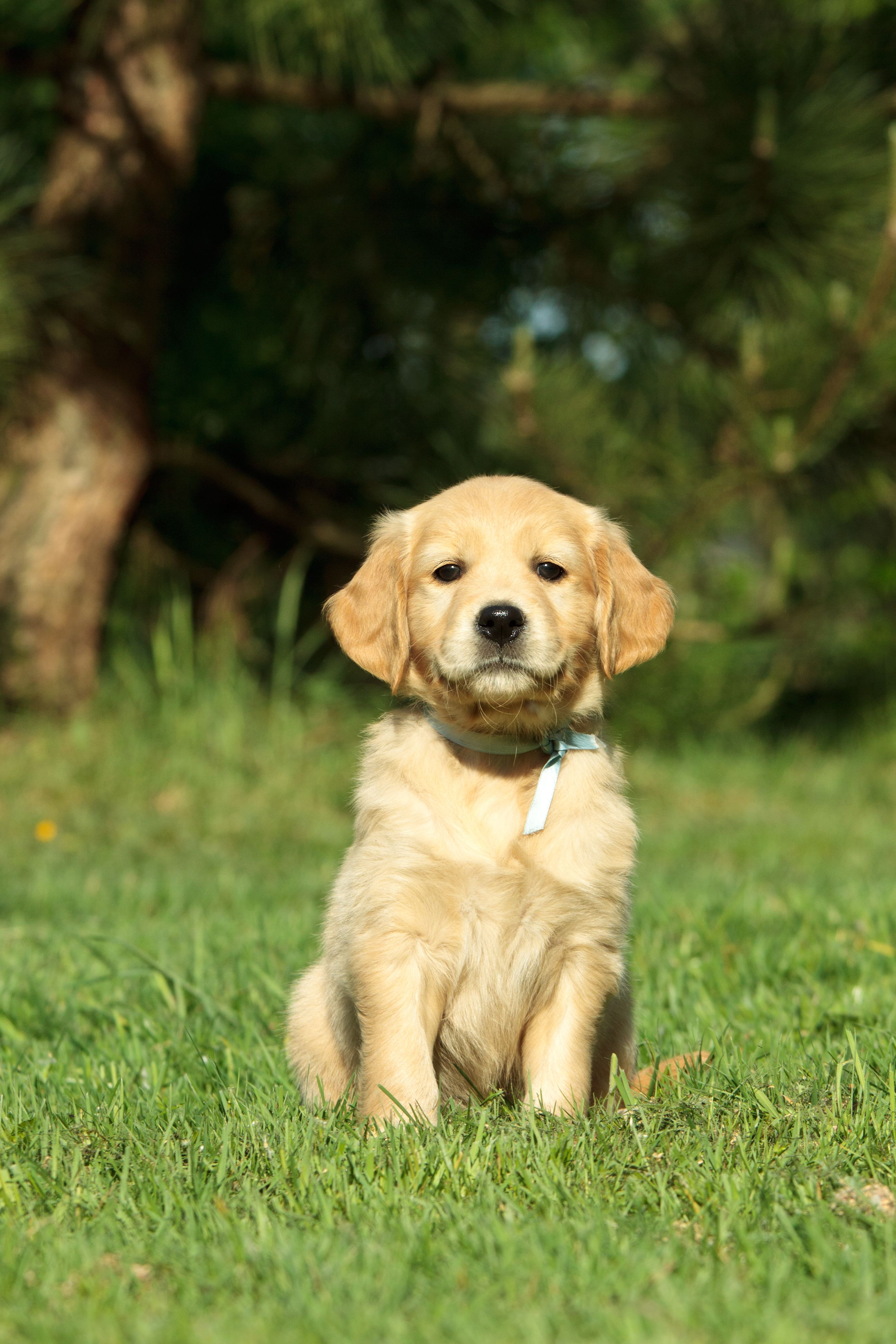 The cutest dogs in the world deserves perfectly cut synthetic grass to play on!