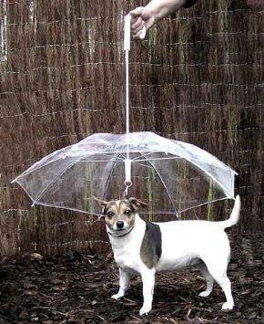 No Wet Dog Smell Pets Dog Umbrella Dogs