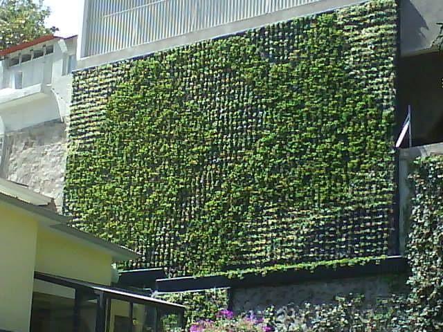 Como hacer un muro verde ideas tips asesor a y for Materiales para un muro verde