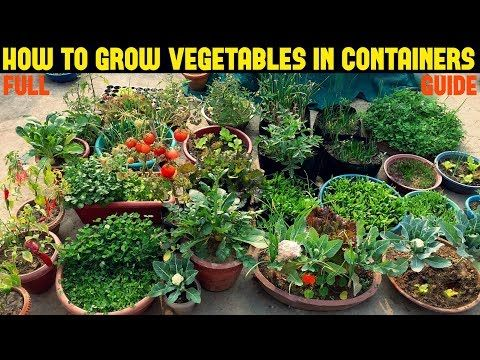 How To Grow Vegetables In Containers Full Information 400 x 300