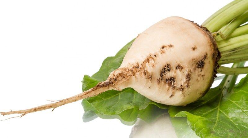 فوائد الشمندر الأبيض موسوعة Beetroot Natural Medicine Health