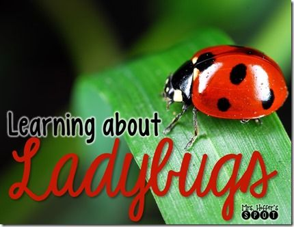 All About Ladybugs!
