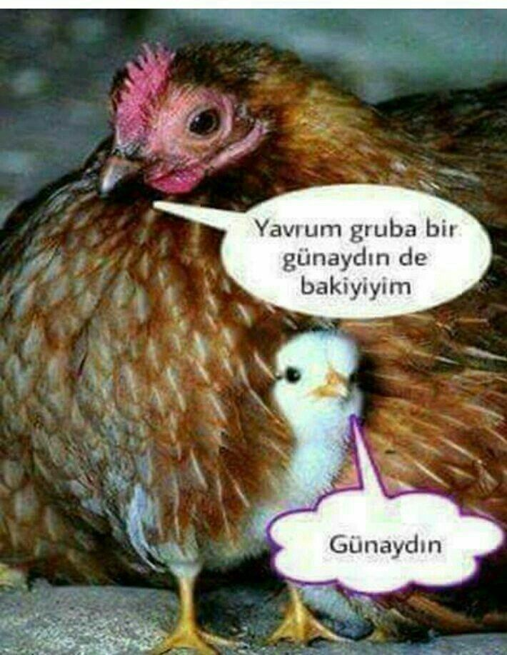 Gunaydin Komik Resimli Mesaj Animals Funny Pictures